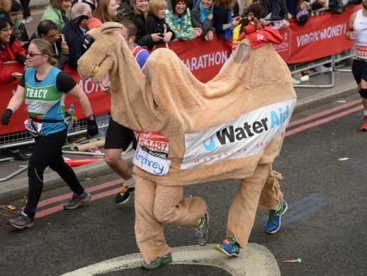 Marathon camel